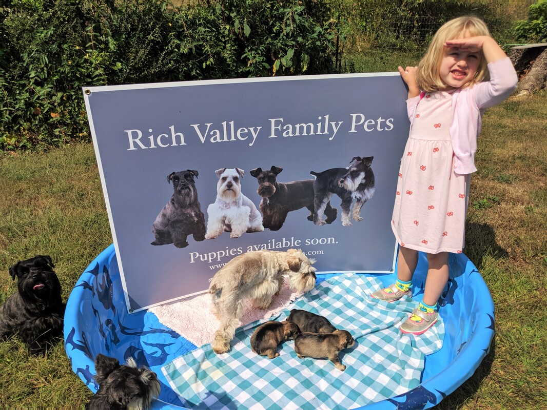 Rich Valley Family Pets Home